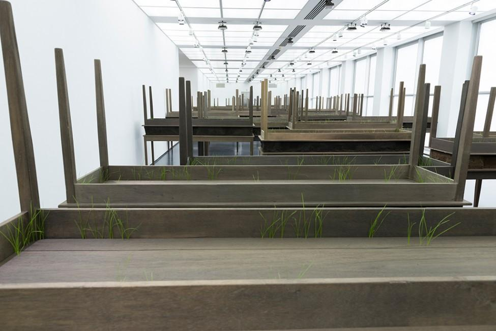 Several dozen rectangular wooden tables with secondary identical tables stacked upside-down on top have thin blades of green grass poking out.