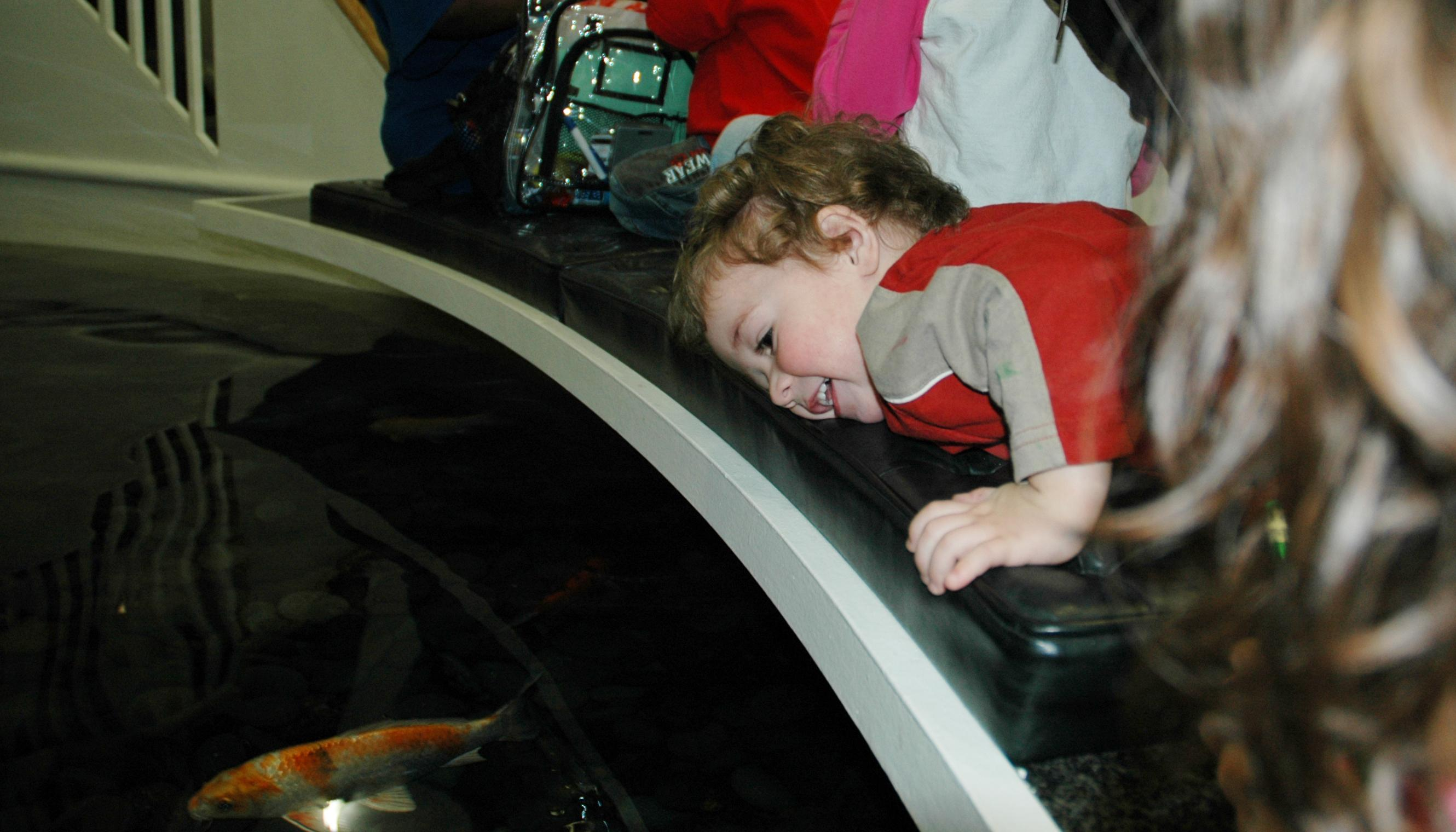 A smiling, little boy presses his face against a bench while looking down at an orange-and-silver fish in an indoor pond.