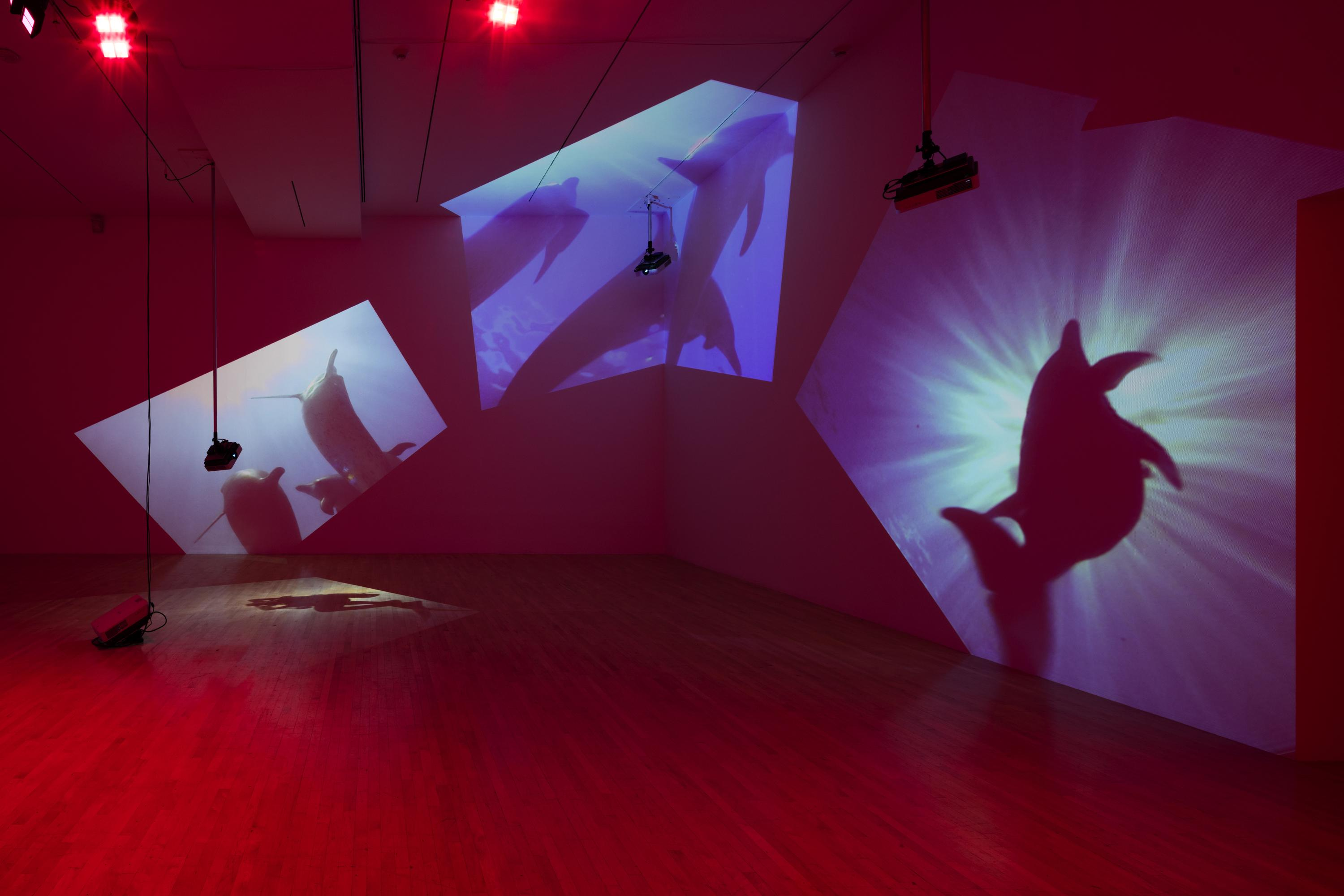 A gallery installation featuring three videos of dolphins underwater projected on the walls and floor. The projectors are visibly suspended at varied heights in the magenta-colored room.