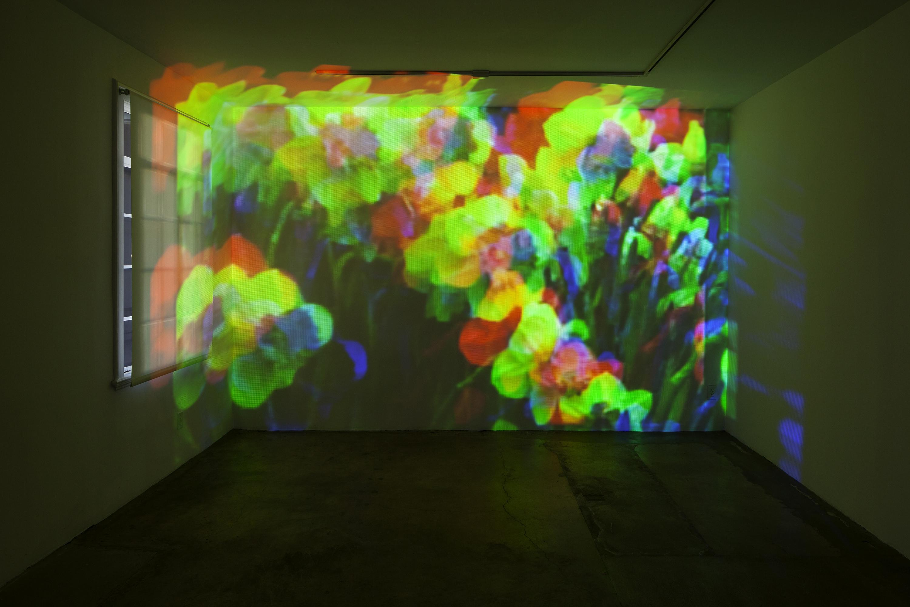 An image of daffodils is projected on the wall of an empty gallery. The image covers the entire wall, and is made of three overlapping projections in red, green, and blue, creating a picture that distorts the flowers.