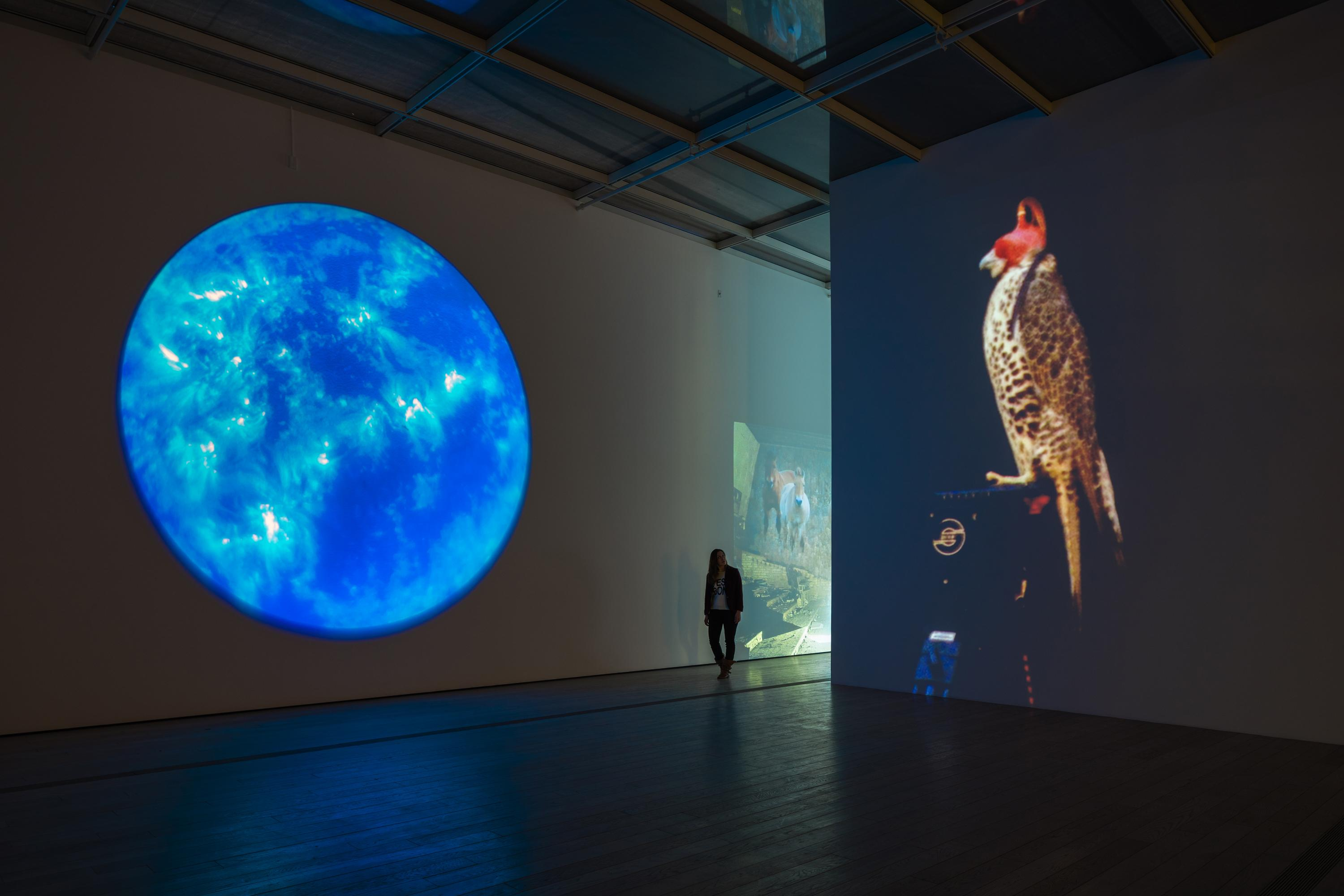A person walks into an open gallery with large, wall-size video projections shown on two walls. One projection shows a luminous blue planet floating in black space; the other features a brown feathered falcon with a red mask on its head, as it undergoes falconry training.