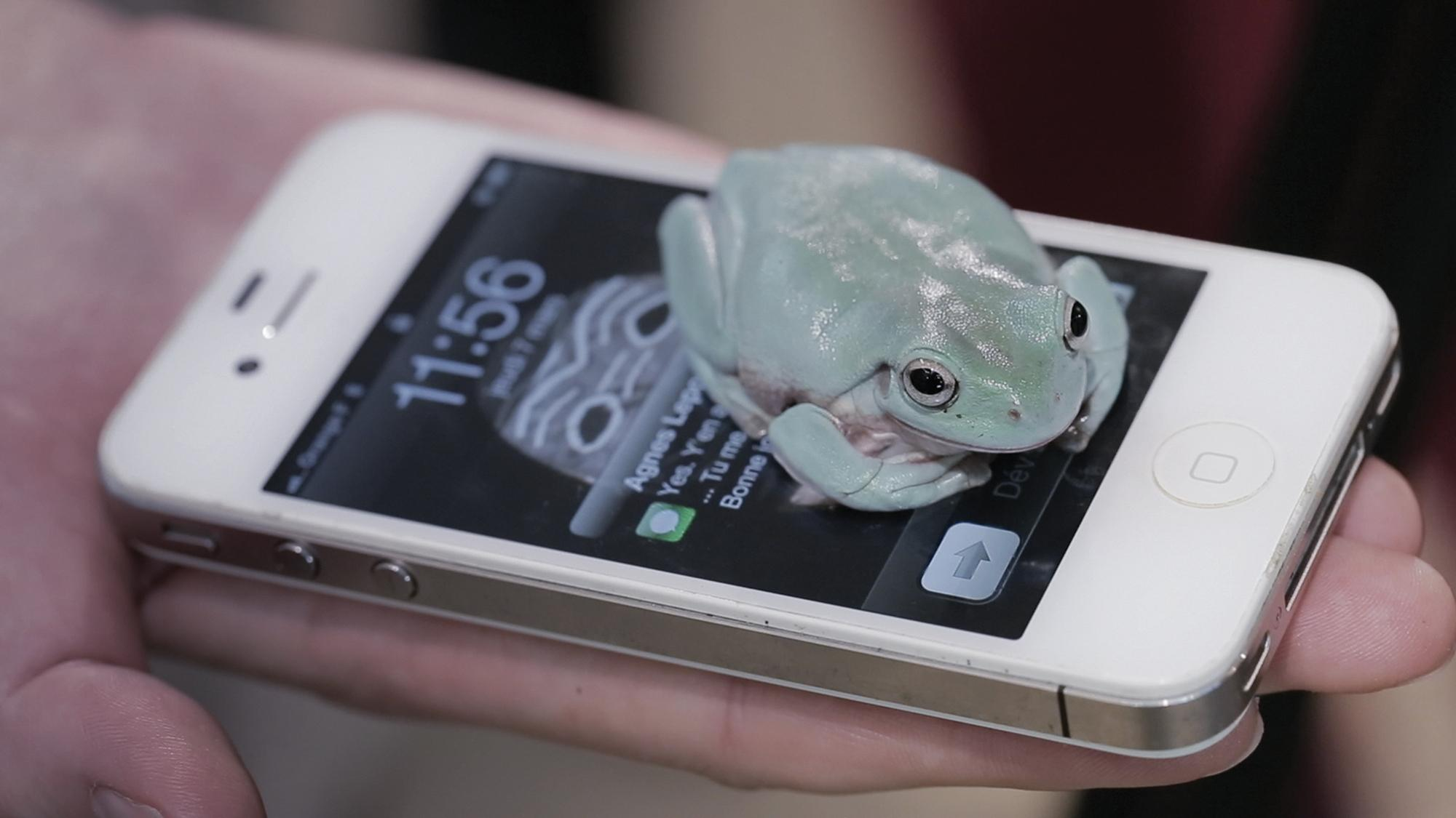 A frog sits on a cellphone, partially obscuring its lit screen; the cellphone rests on a person's outstretched palm.