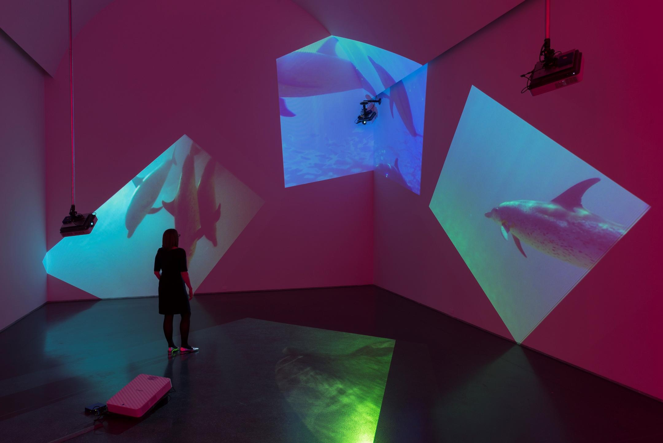 Four trapezoidal projections of a pod of dolphins in varying shades of blue and green are projected onto three red walls and the dark floor of a large gallery. Three of the cameras projecting the videos are visible, suspended from the ceiling.