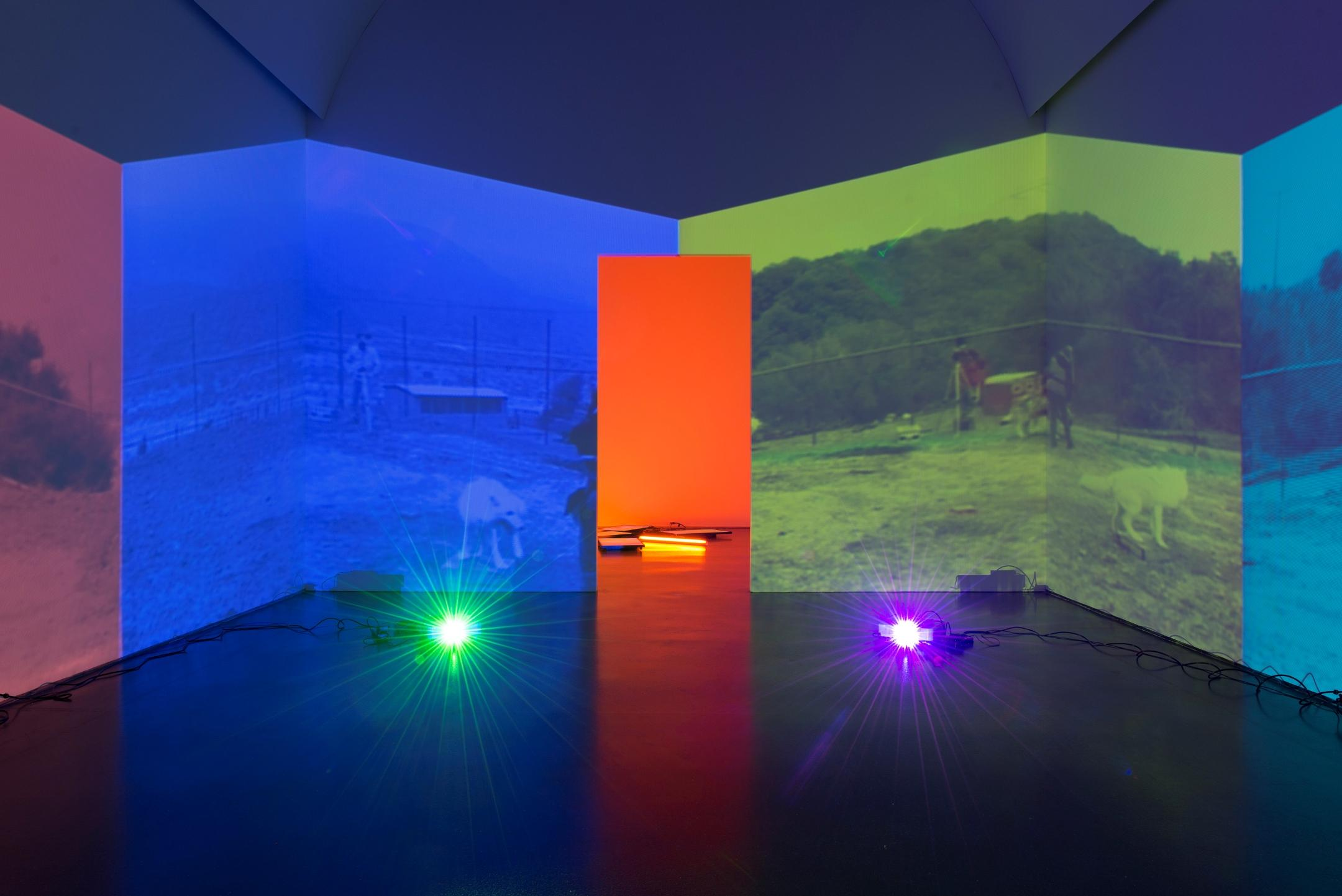 You are in a room with four projections of similar images of two wolves in muted, jewel tones. Two projectors on the floor project at you. In the middle of the room is a door leading to another brightly lit gallery.