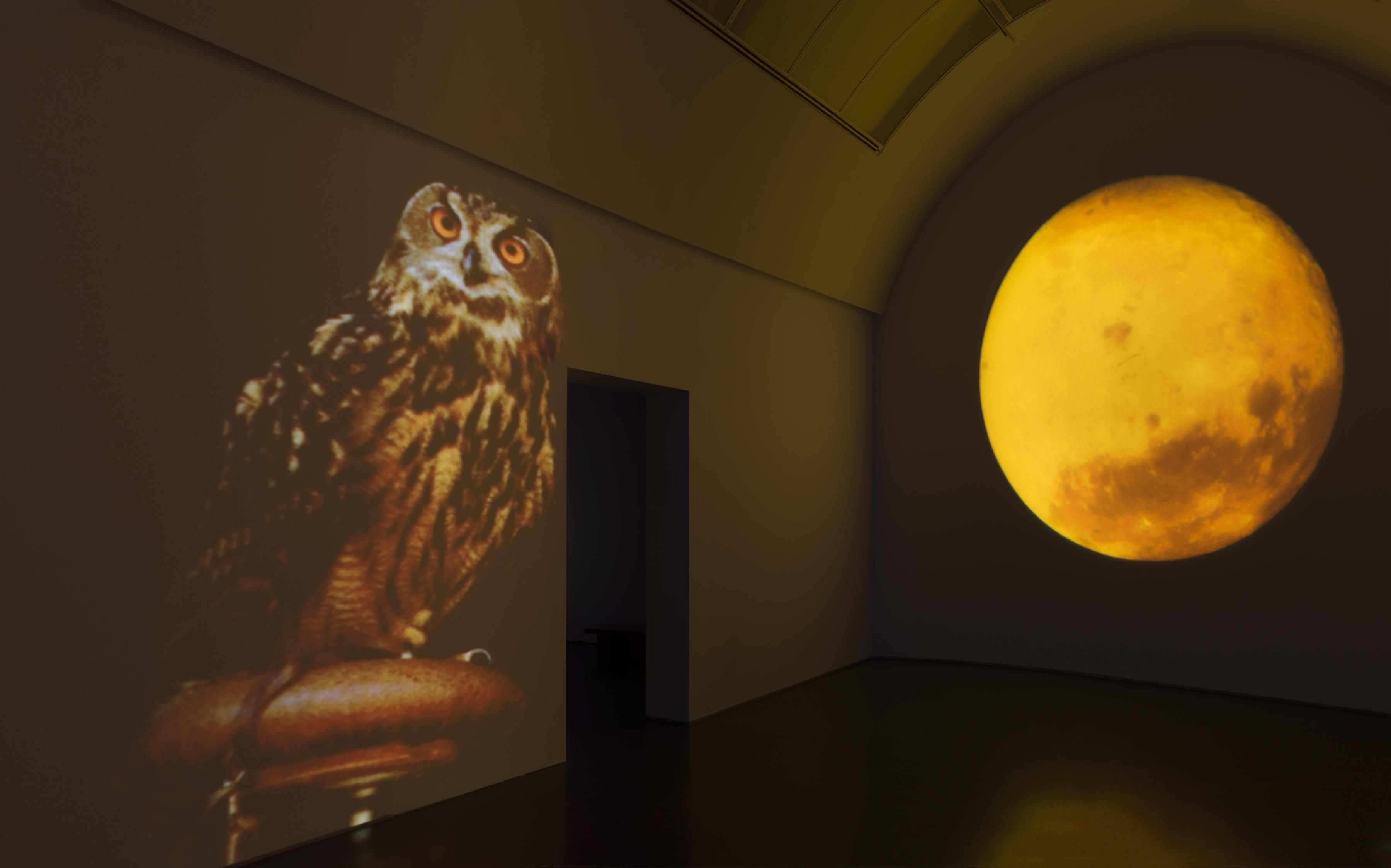 A large owl with glowing orange eyes appears on the wall of a dark gallery, next to a bright yellow-orange full moon.