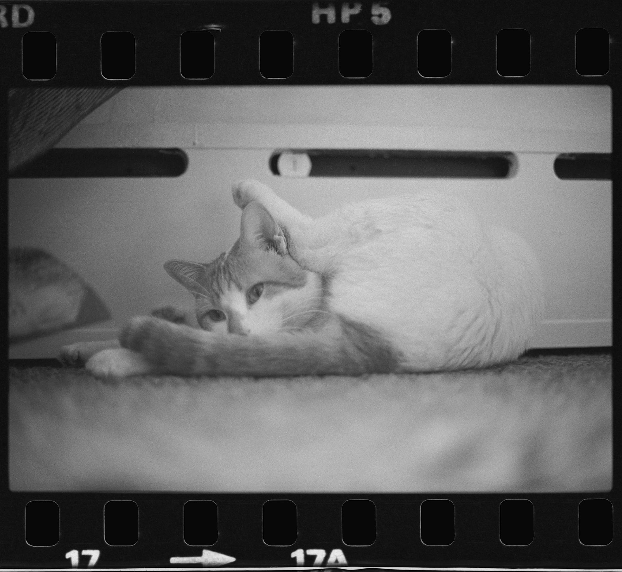 A black-and-white 35 mm film frame features a cat lying on the floor with its hind leg stretched over its head.